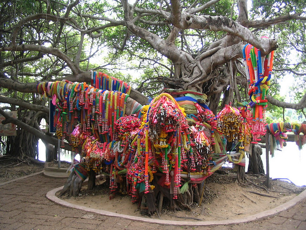 garlands, banyan tree