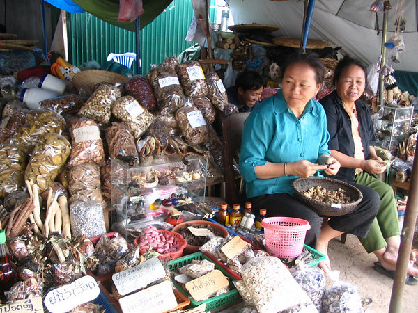 medicinal fungus sellers
